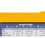 WhiteCoat Clipboard - Vertical - Yellow - Pediatric Edition